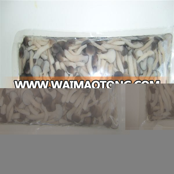 packed in 1kg vacuum bag shimeji mushroom shimeji mushroom price bottle pleurotus mushrooms for Brazil